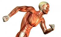 تصویر برای دسته تقویت عضلات-بدنسازی