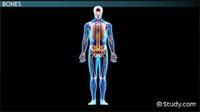 تصویر برای دسته بر اساس اثر بر اعضاء بدن